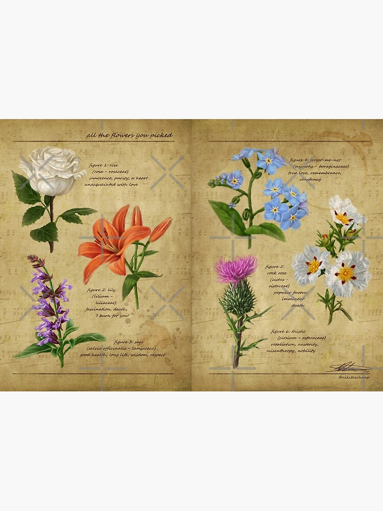 All The Flowers You Picked - Botanical Studies by asmallpotato