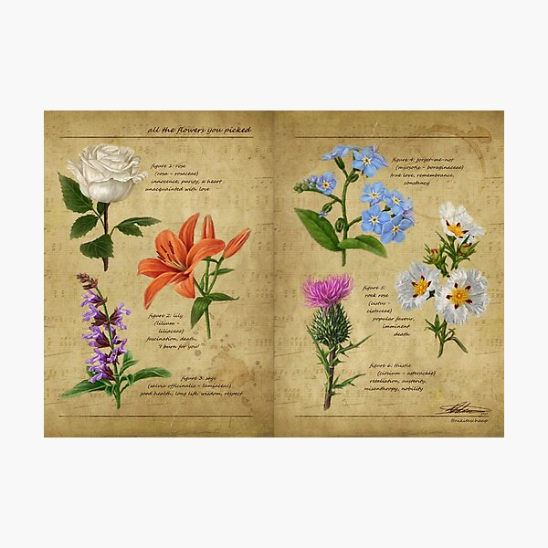 All The Flowers You Picked - Botanical Studies Photographic Print