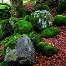 Natural Emeralds. Wicklow. Ireland by JennyRainbow
