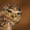 Feature Banner A OWL