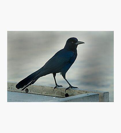Big Blue  Photographic Print