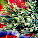 Garlic Chives by Janie. D