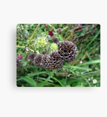 Sci-Fi seed pods Canvas Print