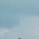 Tree on a hill by UniSoul