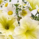 Yellow Petunias And Daisies  by Sandra Foster
