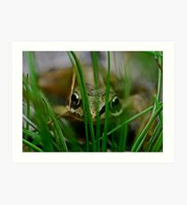 Froglet Keeking Art Print