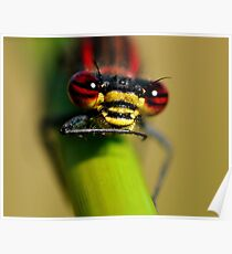 Large Red Damselfly's Face Poster