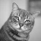 Happy Hunter House Cat  by SB  Sullivan