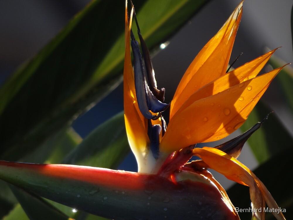 Colors And Light In The Nature - Colores Y Luz En La Naturaleza by Bernhard Matejka
