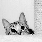 MillllieMac Scarediest Cat by Ladymoose