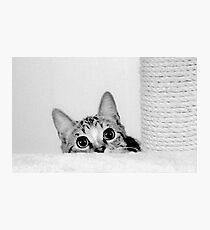 MillllieMac Scarediest Cat Photographic Print