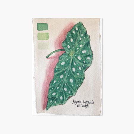 Begonia Maculata Single Leaf Watercolor Art Board Print