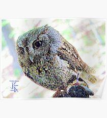 Eastern Screech Owl Resting Poster