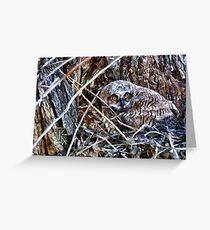 Great Horned Owl Resting Greeting Card
