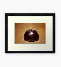 Chesnut Framed Print