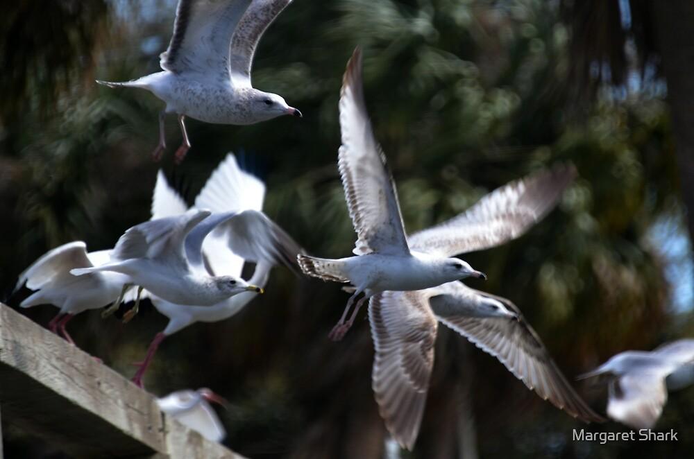 Flight by Margaret  Shark