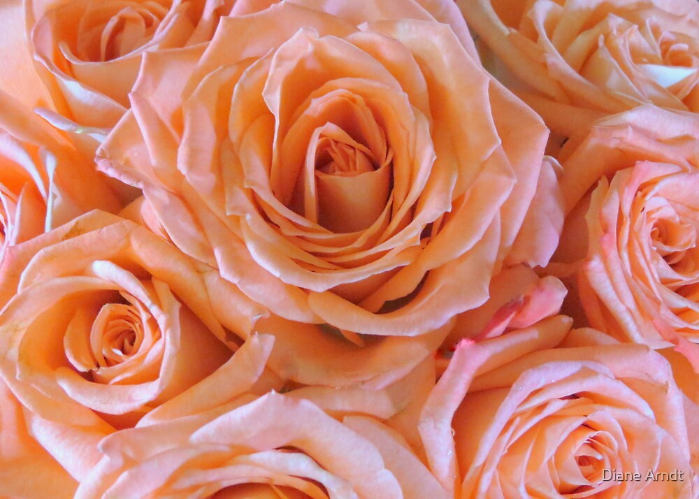 I Love My Husband by Diane Arndt