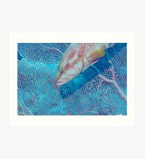 Coral trout and seafan Art Print