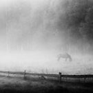 a horse in the fog by kavolis