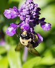 Bee 5 by John Velocci