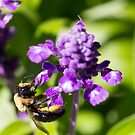 Bee 6 by John Velocci