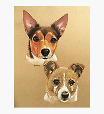 Winnie & Belle the adorable JRTs Photographic Print