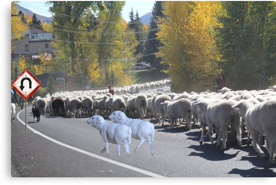 """Whadda ya mean you want to go back…..can't you read the sign????  It says 'No Ewe Turn"""" ! by Susan Littlefield"""