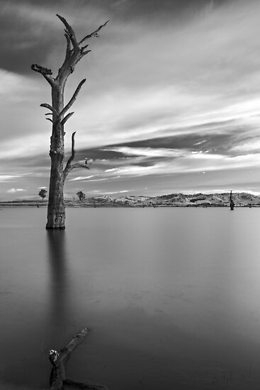 Portrait of Solitude by Mark  Lucey