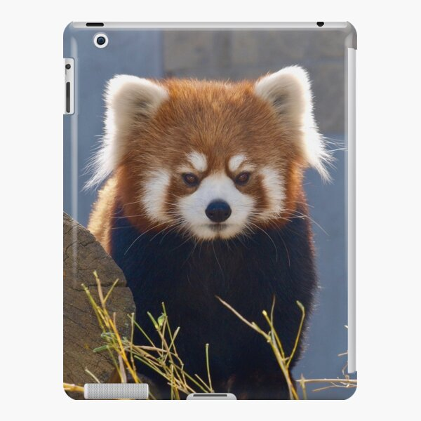 Cute Red Panda  iPad Snap Case