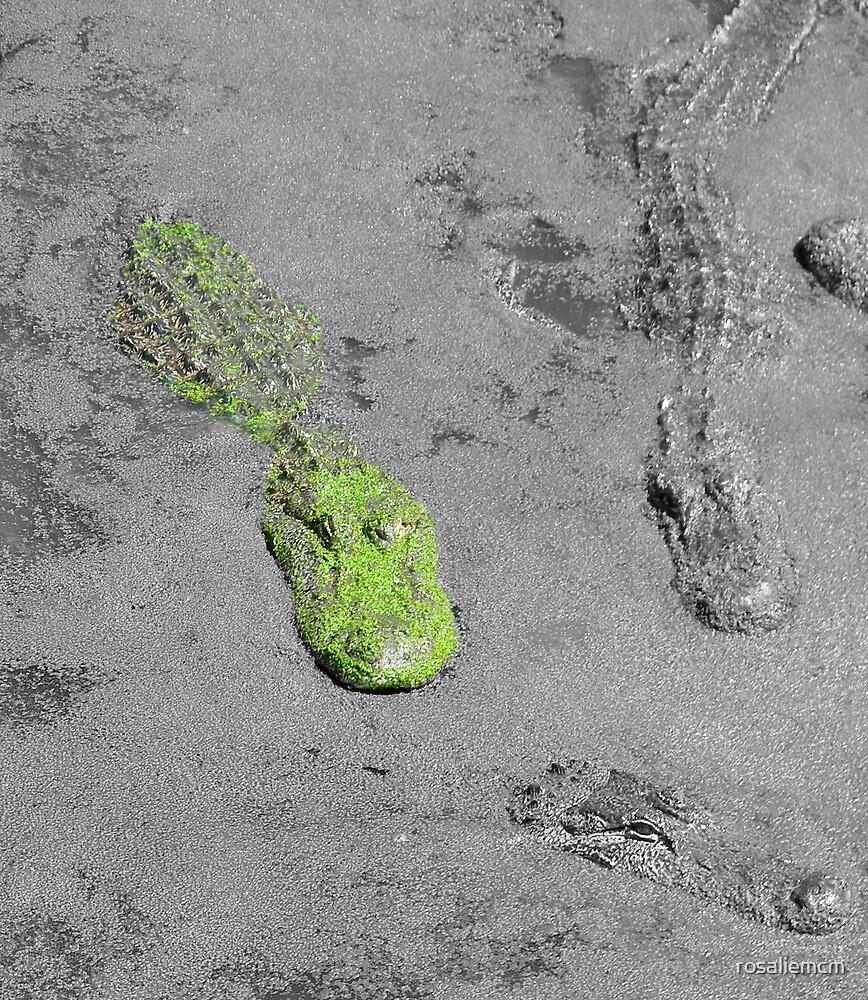 Algae-Gator by rosaliemcm