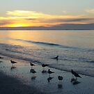 Birds and Sunset by Rosie Brown