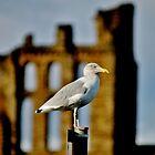 Bird Watching by Ladymoose