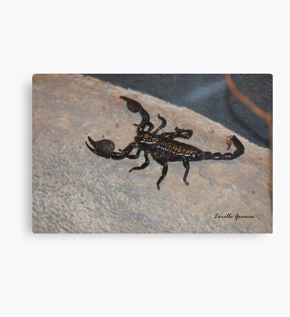 Black Scorpion Canvas Print
