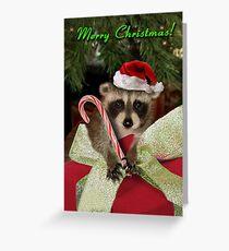 Christmas Raccoon Greeting Card