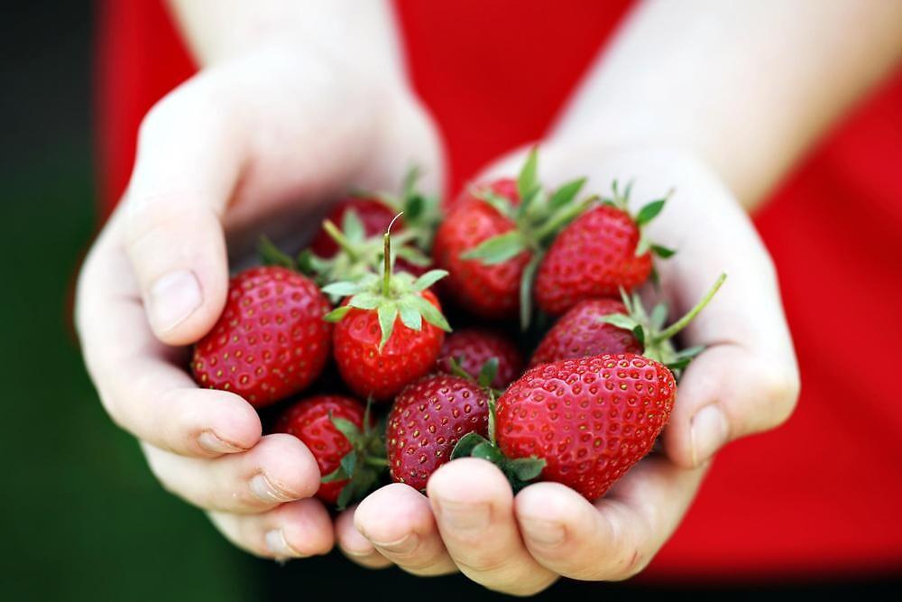 Handful of Strawberries by Megan Schatzman