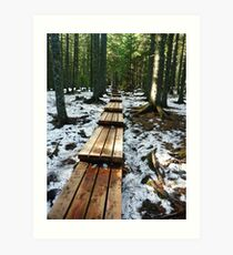 Path through the woods Art Print