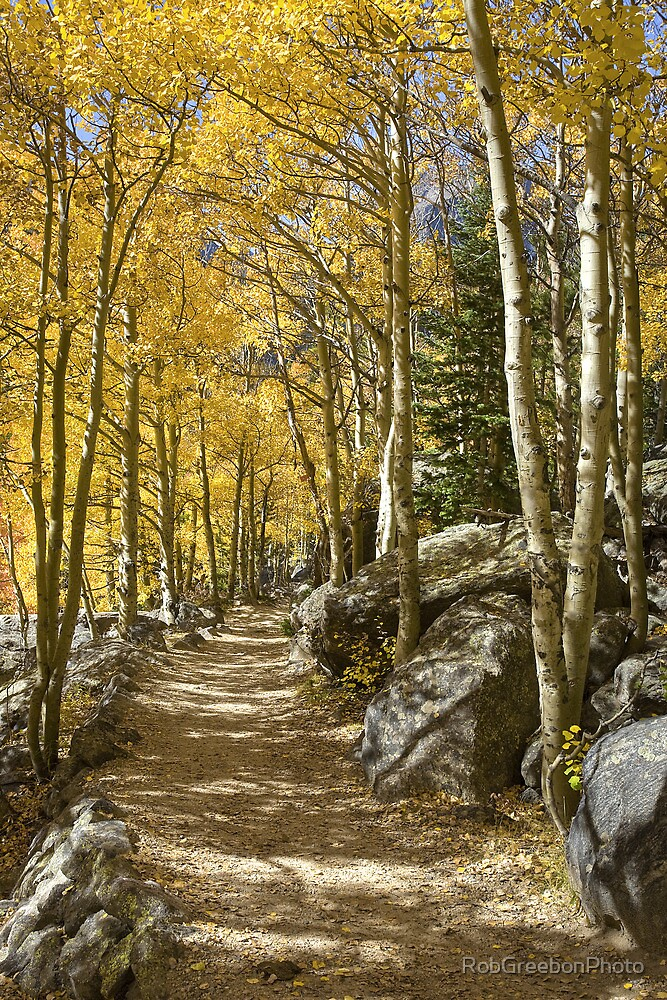 Quot Aspen Tree Path Rocky Mountain National Park Colorado Quot By Robgreebonphoto Redbubble