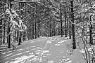 Snowshoe trail by PhotosByHealy