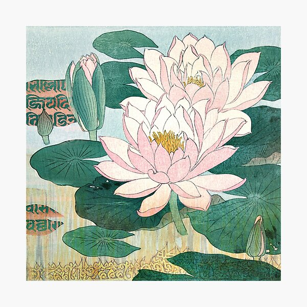 Sacred Lotus Flower Photographic Print