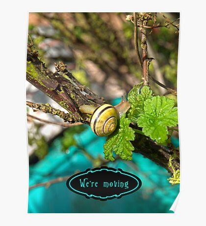 Yellow Grove Snail VRS2 Poster