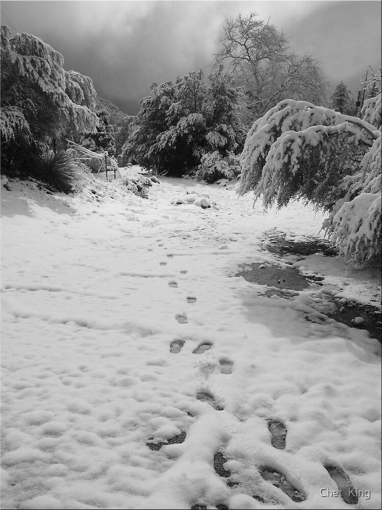 Tracks by Chet  King