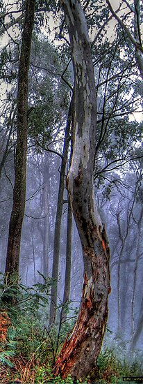 A Road Less Travelled - Victorian Alps (Vertical Crop) #2  - The HDR Experience by Philip Johnson