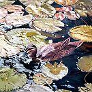 Duck in the Pond by ZiyaEris