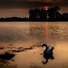 Swan Lake by David Patterson
