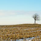 Tree on a corn field! by vasu