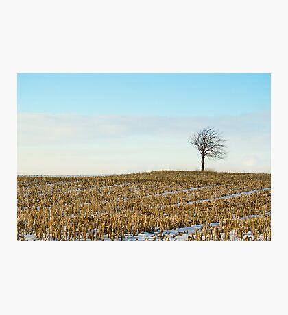 Tree on a corn field! Photographic Print