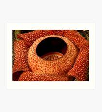 Rafflesia, Borneo Art Print