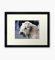 airedale terrier  Framed Print