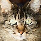 kitty C by pcfyi