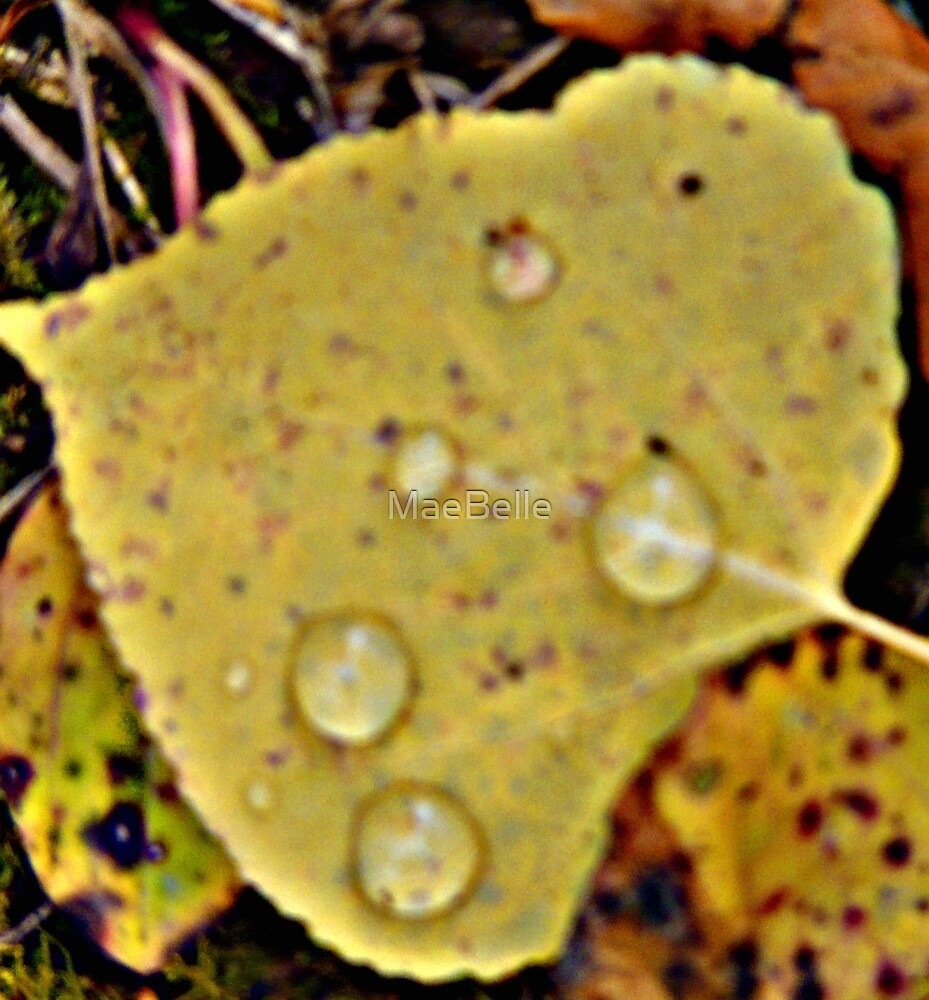 Water Dropplets on a Leaf by MaeBelle